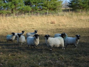 2010 breeding season
